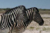Namibie2004-10