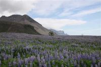 ijsland-0775