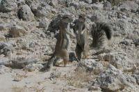 Namibie2004-09